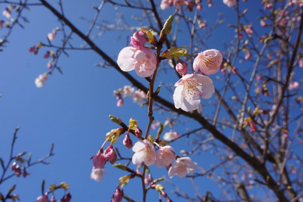 春をみーつけた♪